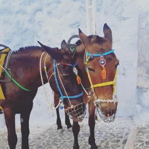 Les 2 ânes - Santorin